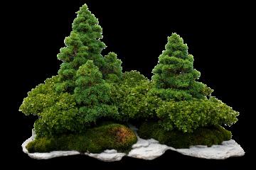 Miniaturyzacja drzew bonsai