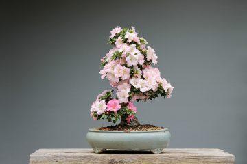 Kwiaty w doniczce - bonsai