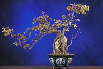 Sztuka bonsai