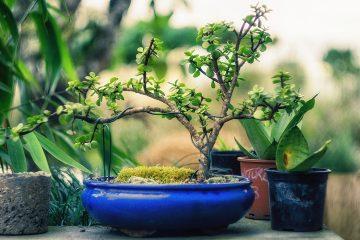 Doniczki ceramiczne do bonsai