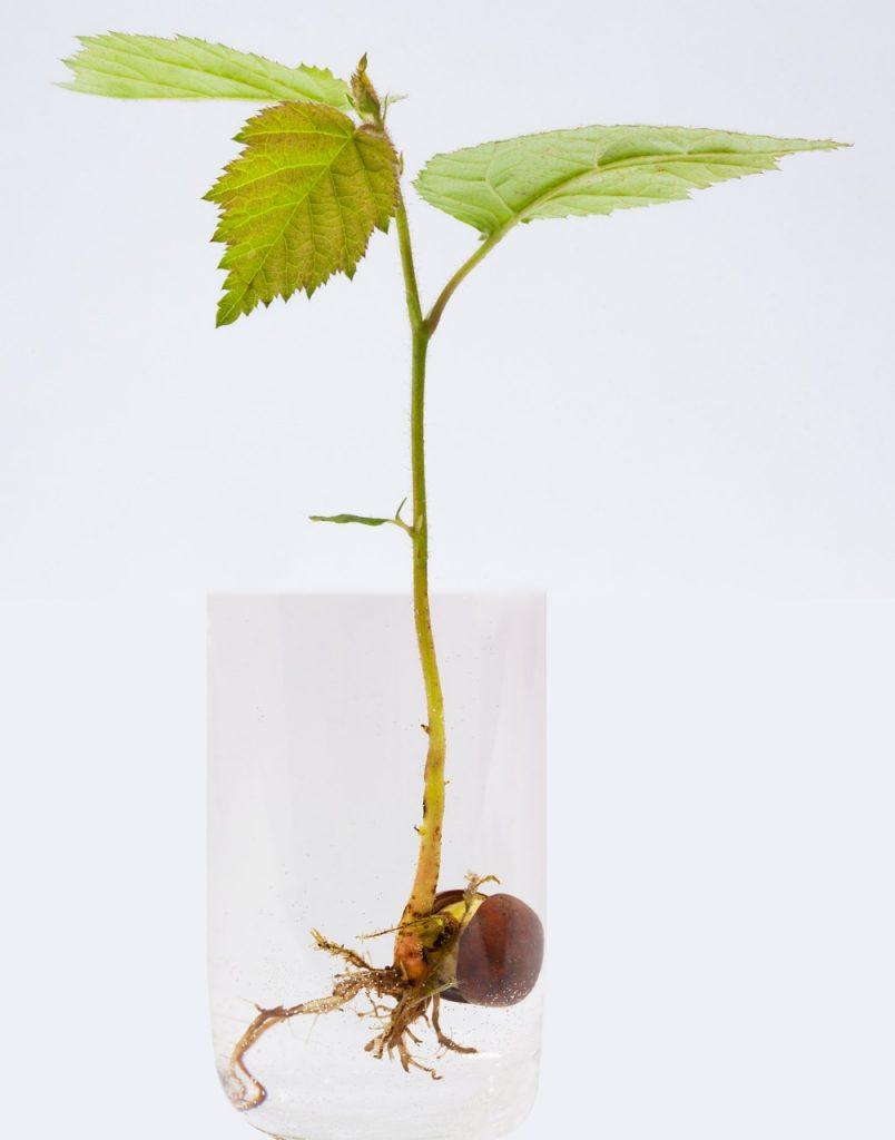 Bonsai – wybieramy sadzonkę