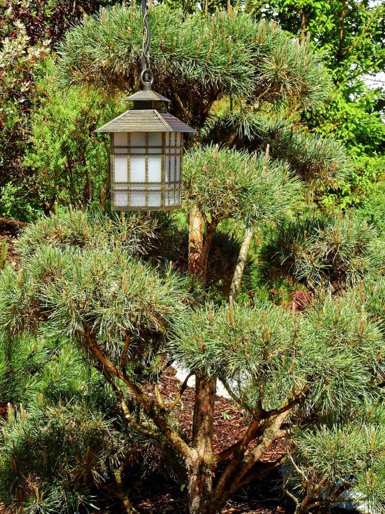 Czy bonsai trzeba doświetlać?